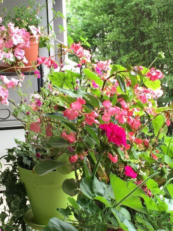 17 meilleures id es propos de balcon parisien sur pinterest france caf de paris et - Terrasse et jardin fleuri paris ...