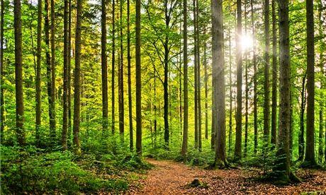 lesy - Hledat Googlem