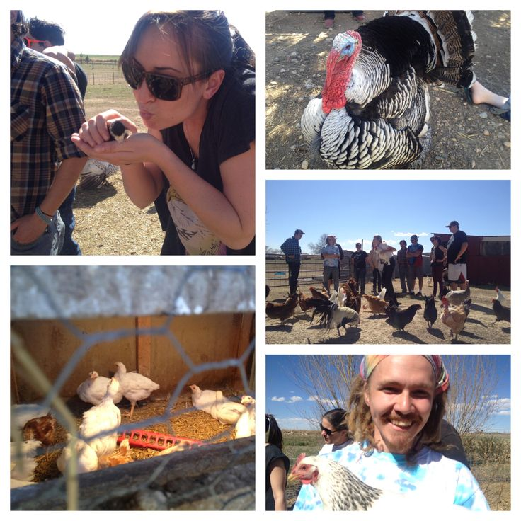 Get an inside look into our Farm To Table® Experience by seeing these behind the scenes photos of our student's recent trip to Carrie Clucks egg & poultry farm.