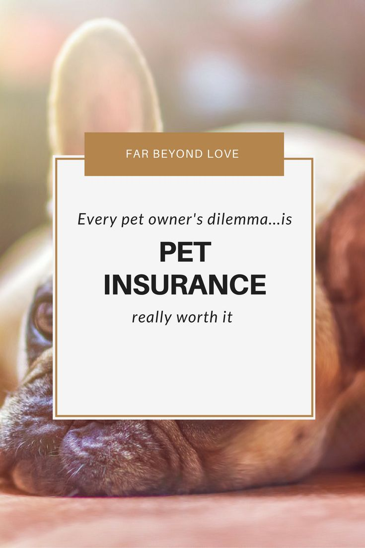 What are your thoughts on pet insurance? Is the cost worth it? It's every pet owner's question.