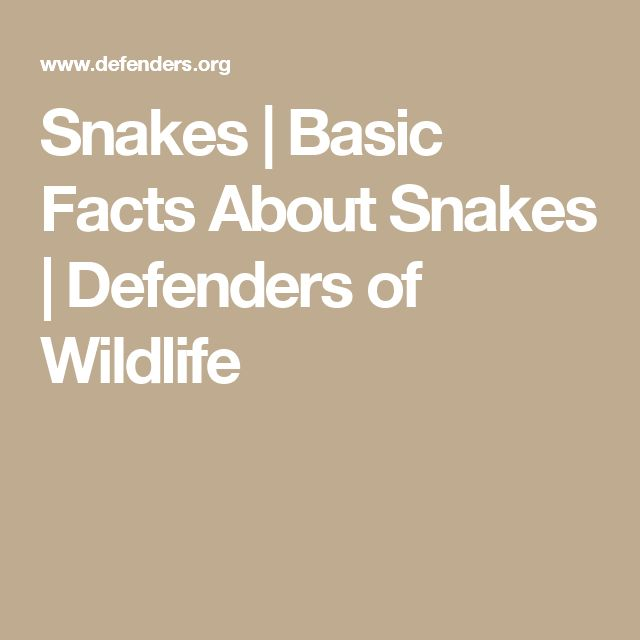 Snakes | Basic Facts About Snakes | Defenders of Wildlife