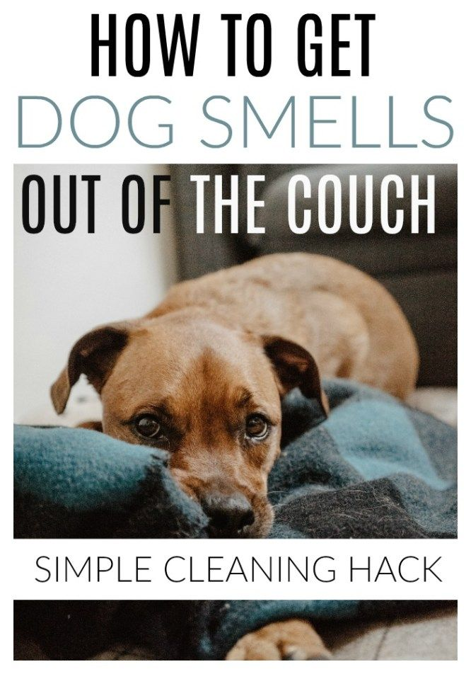 How To Get Dog Smell Out Of Couch 5 Easy Steps Dog Smells Cleaning Hacks House Cleaning Tips