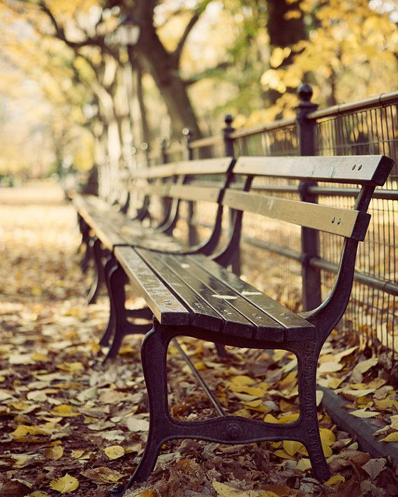 Central Park Bench in Autumn NYC Fall by EyePoetryPhotography (Art & Collectibles, Photography, Color, Nyc, New York, Brown, Autumn, Fall Photography, Central Park, Fall Foliage, Leaves, Harvest Gold, Yellow, Bench)