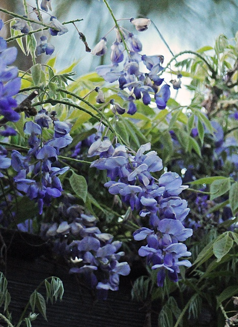 Wisteria Vine Craft Ideas
