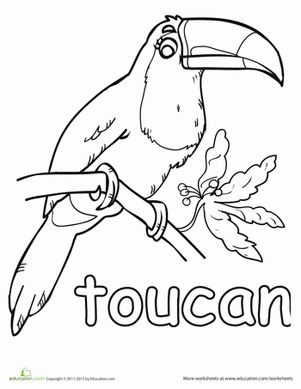 Toucan Coloring Page Coloring Pages Coloring Worksheets