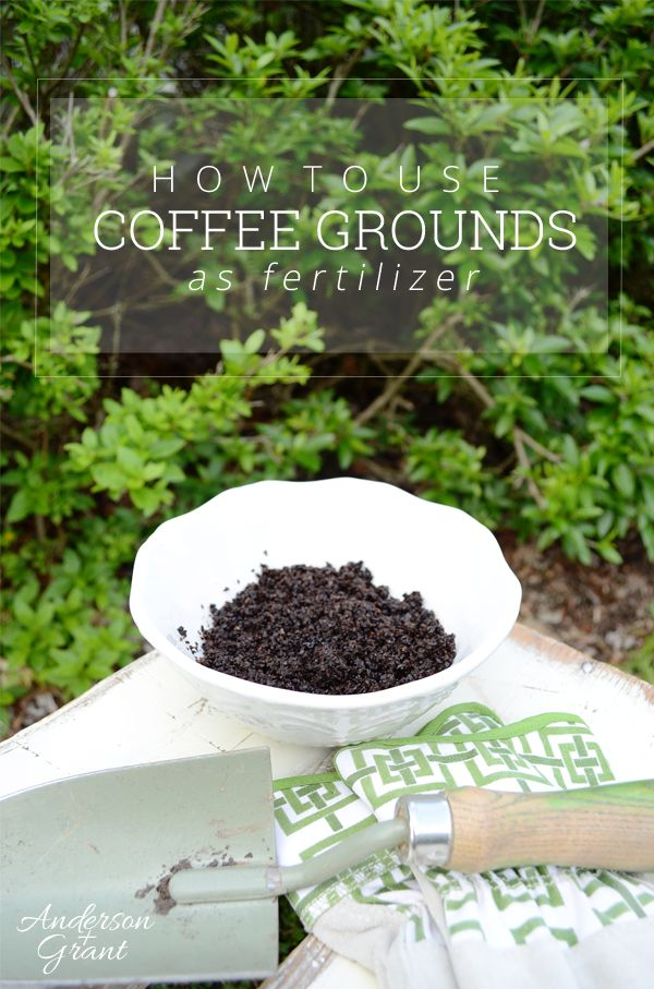 How To Use Coffee Grounds As Fertilizer Gardens