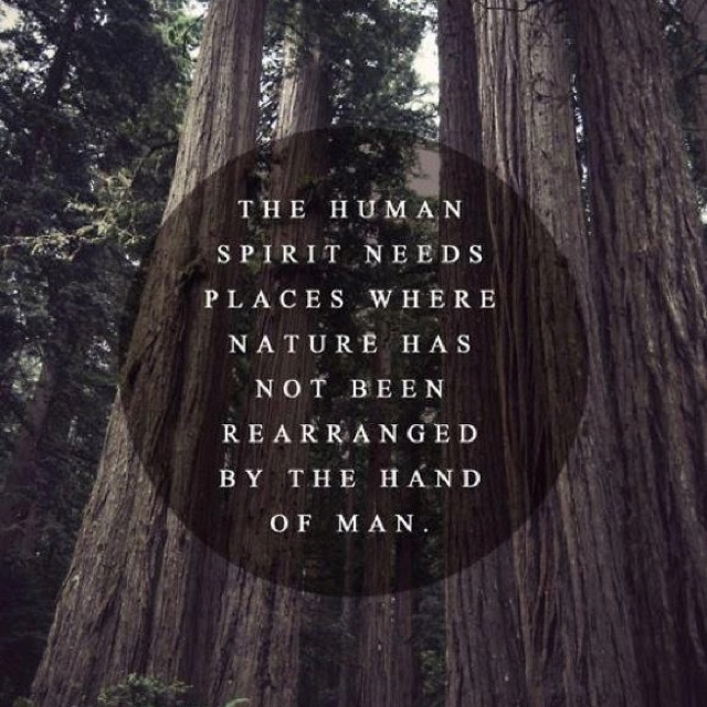 Quotes About Nature Ecosia