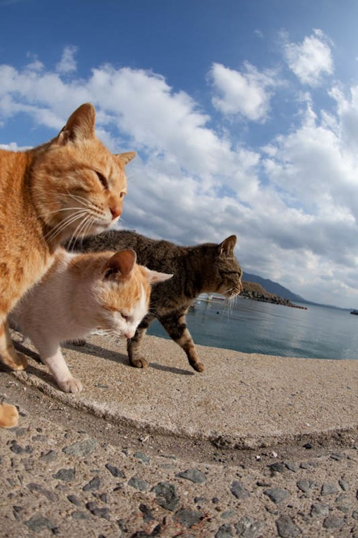 50 Amazing Photos From Cat Heaven Island In Japan (make sure to listen to the 'optional soundtrack! ha!)