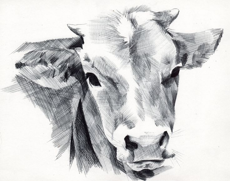 www.doquigi.com #animals