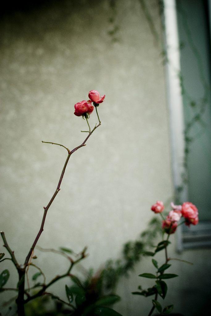 Les 577 Meilleures Images Propos De All E Des Fleurs Sur
