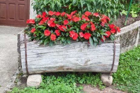 petunias en jardines - Buscar con Google