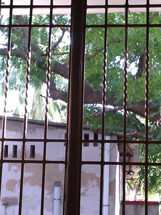 Nature behind bars..!!