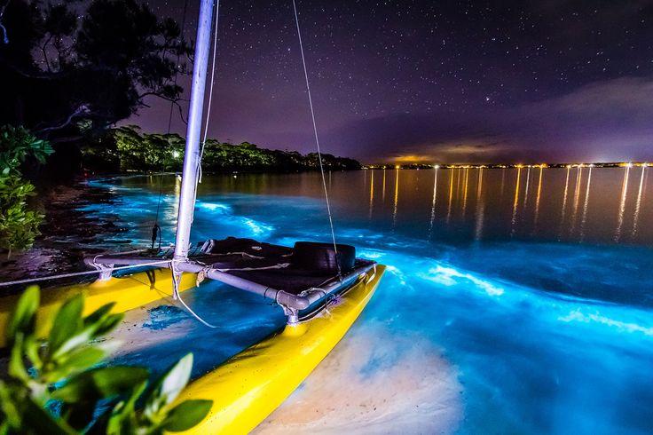 bioluminescent plankton, Vincentia, New South Wales, Australia