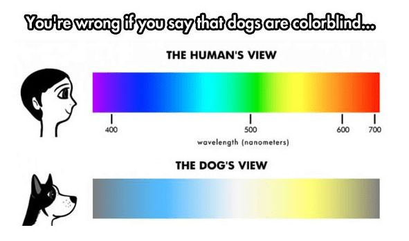 The Truth About Dog's Vision
