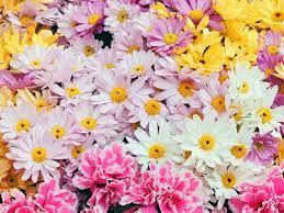 fiori foto - Cerca con Google