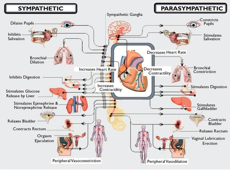 What is Dysautonomia? Dysautonomia is an umbrella term used to describe various conditions that cause a malfunction of the Autonomic Nervous System. The Autonomic Nervous System (ANS) controls most of the essential functions of the body that we do not consciously think about, such as heart rate, blood pressure, digestion, dilation and constriction of the pupils of the eye and temperature control.