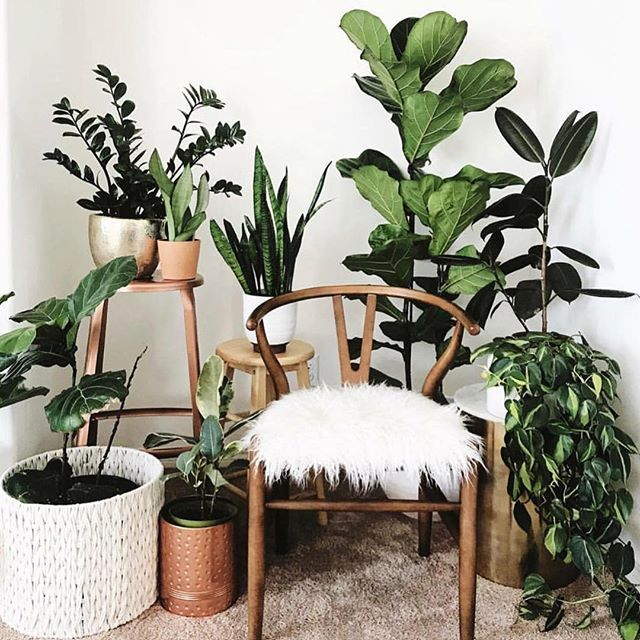 An Amazing Ratio To Model Your Whole Home By Approximately 8 Or So Plants To Every Piece Of Furniture Image Plantladyco Home Decor Decor Decor Design