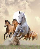 La120 impresso pintura a óleo sobre tela para decoração de casa como presente original parede cavalos running água tinta no