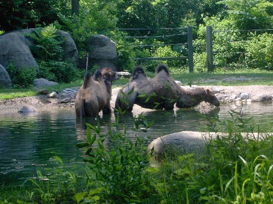 20 best bronx zoo images on Pinterest   Bronx zoo, The zoo ...