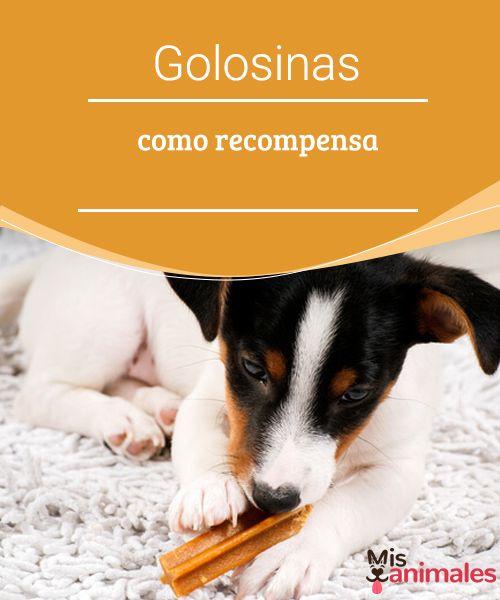 Golosinas como recompensa   Darle golosinas como recompensa a los perros es una de las estrategias de refuerzo positivo más usada, te enseñamos a seleccionar las mejores para tu perro. #golosinas #estrategias #selección #consejos
