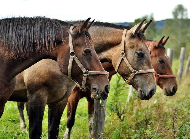 Imagen gratis en Pixabay - Caballos, Bieszczady, Animales