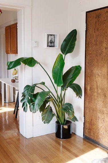 12441 besten urban jungle bloggers bilder auf pinterest for Moderne grosse zimmerpflanzen