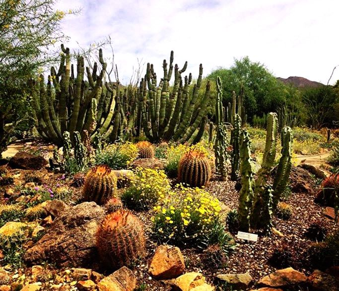 Arizona-Sonora Desert Museum's walking paths meander through various Sonoran Desert habitats showcasing 230 animals, 16 individual gardens, 1,200 plant species, and 56,000 plants. | Arizona | Things To Do | Educational Fun | Photo via IG user @noel.longo