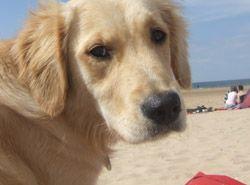 Dog-friendly Norfolk beaches Www.Larkcottageholidaycottage.Co.Uk https://www.glavenvalley.co.uk/burnham-overy-staithe/holiday-cottages/sage-cottage-burnham-overy-staithe4