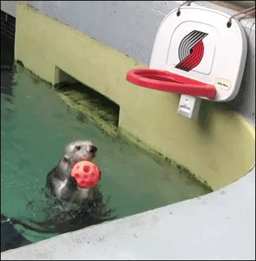 Any otter that can slam-dunk. | 29 Things That Will Make You Grin Like An Idiot However Badly Your Day's Going