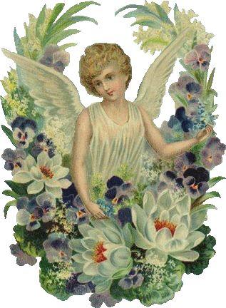 angelo pasquale