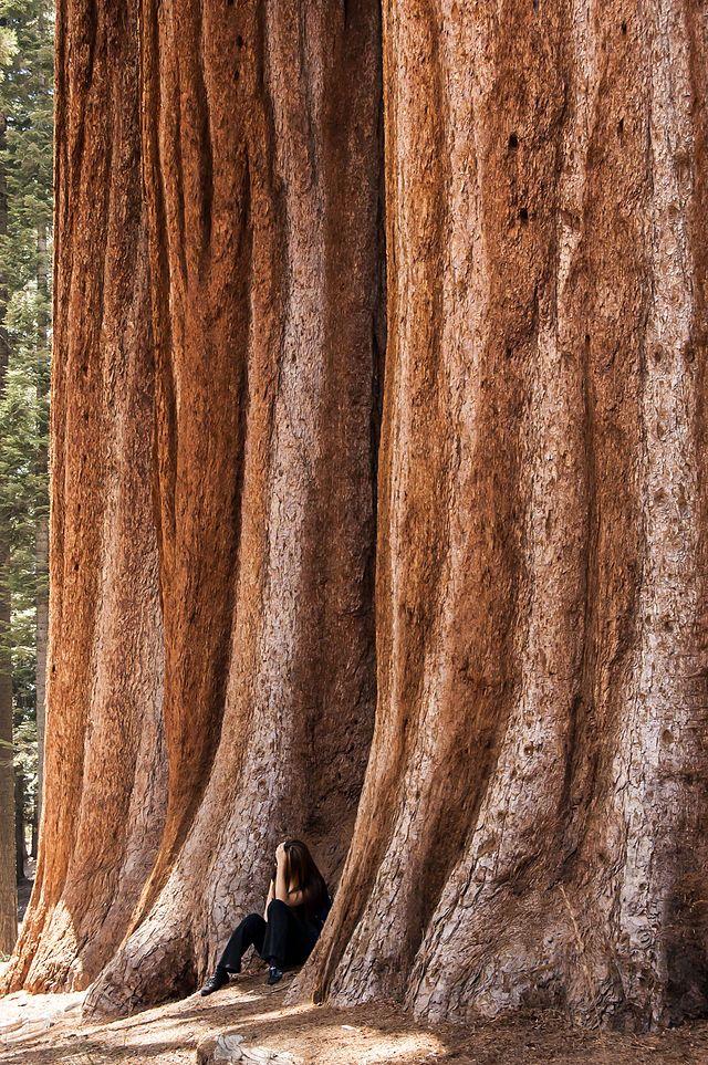 California's Sequoia National Park