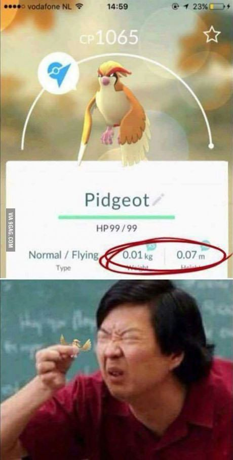 What is that ? A pidgeot for ants ?!?!!?!?
