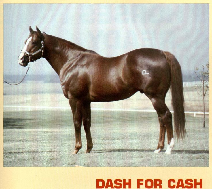 Max's people: Dash For Cash