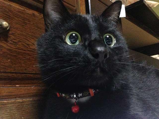 黒猫 黒ねこ