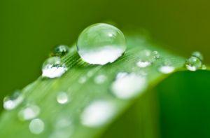 Quanta #acqua nel terreno del #giardino #biodinamico? Ecco la risposta..