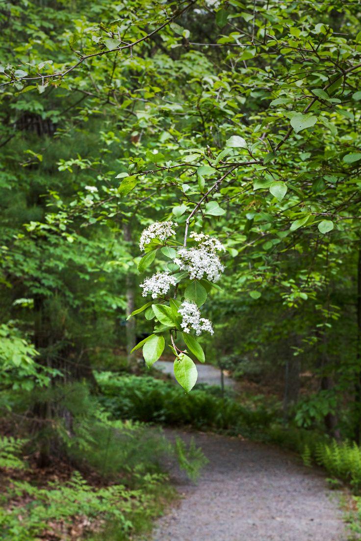 The wildlife garden in the h l blomquist garden of native plants - 57 Best Honey Bee Plants For Nc Images On Pinterest Honey Bees Garden Plants And Flower Gardening