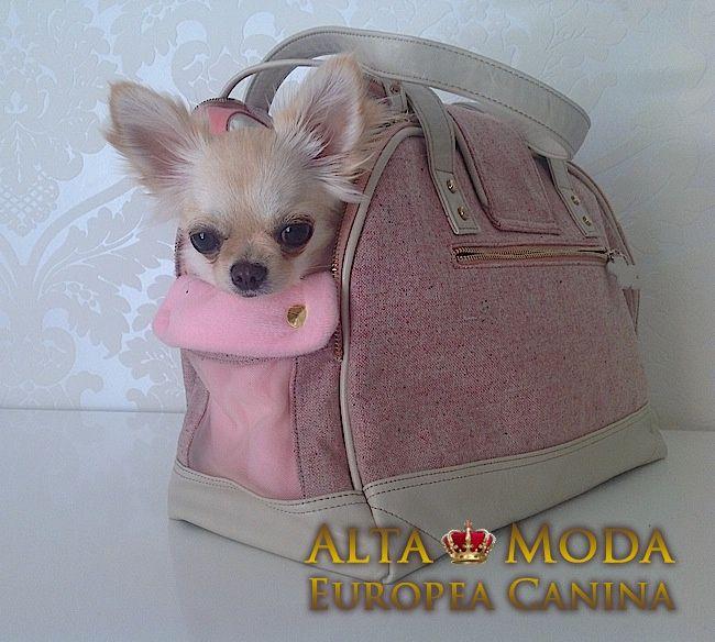 http://chihuahuas-love.com/cachorros-en-venta/rambo-detail