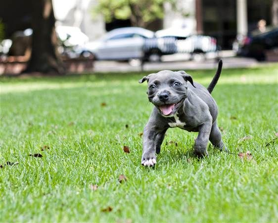Deformed puppy recovered from trash - learns to walk - LOVE this precious story
