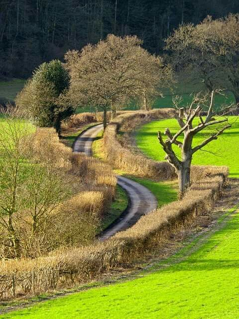 Winding Country Lane near Nettlebed in the Oxfordshire countryside on a sunny January afternoon.