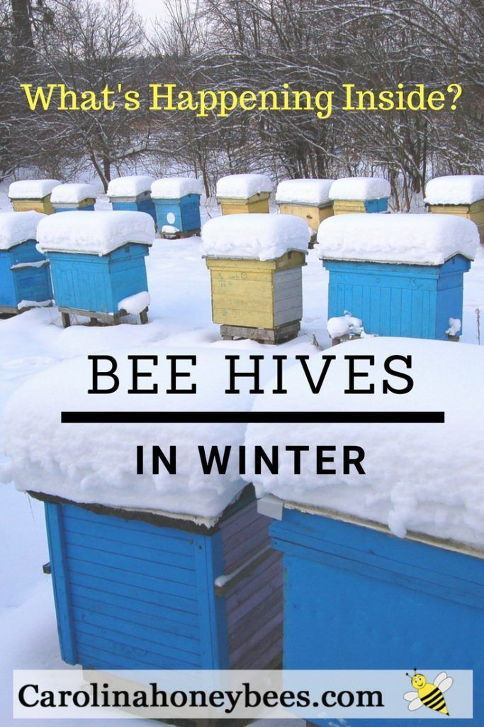 50+ Where do bees go in the winter ideas