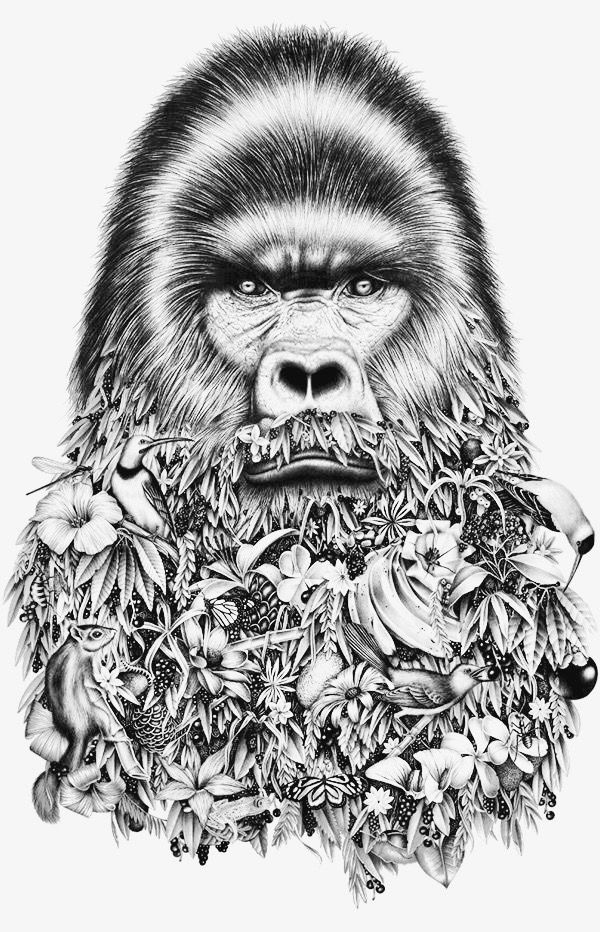 Gorilla Adult Coloring Pages Adult Coloring Pages Coloring
