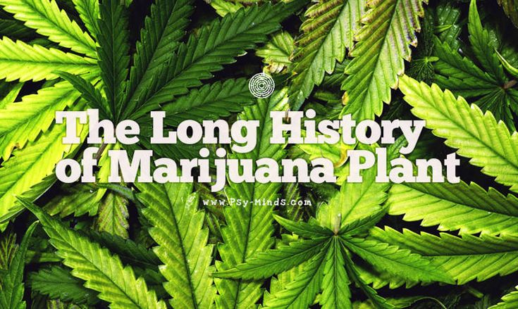 The Long History of Marijuana Plant - @psyminds17