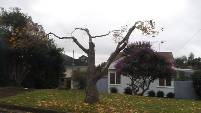 You call this pruning a tree? A tree in Campbelltown is cut back from powerlines.
