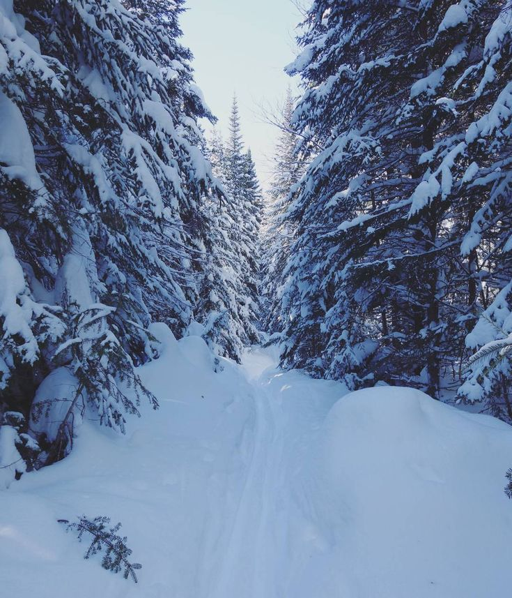 """64 Likes, 4 Comments - Just.a.girl (@pascalemalenfant) on Instagram: """"❄❄❄ #cantwait #looklikeparadise #snow #winter"""""""