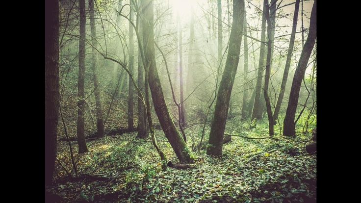 Beautiful Hungary: Mystic - misty forest in Arló