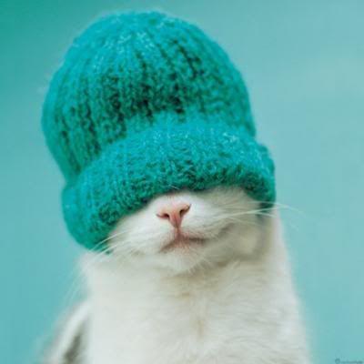 tykkeisköhän Tyyne-kissulikin tälläsestä!? xD  Would my Tyyne-cat also like that kind of woolyhat!?