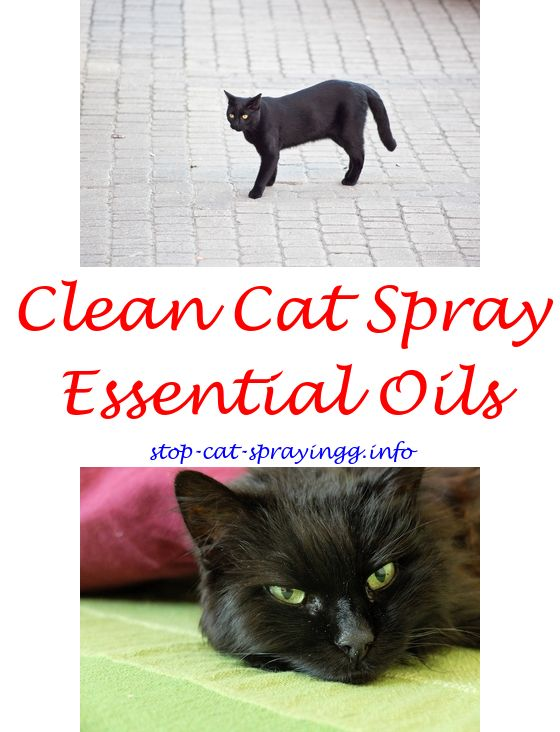Ant Spray Safe For Cats Cat Cat Deterrent Spray And Flea Spray