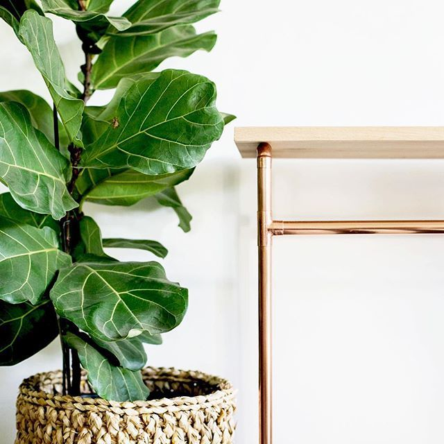 The High Oak Table & fiddle leaf fig.