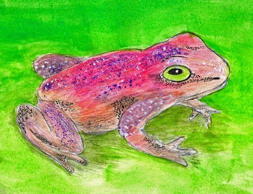 Frog3 http://zeichnen-rosenau.blogspot.ch/2014/04/frosche.html