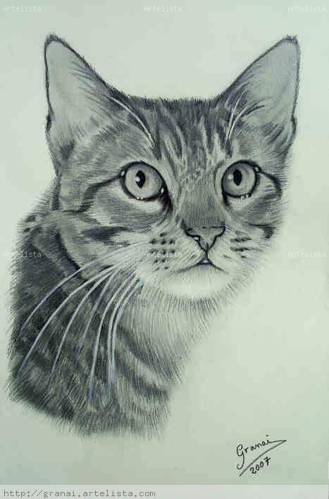 Gatos dibujos a lapiz - Imagui
